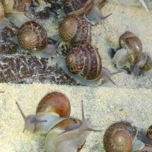 karmienie ślimaków na polu