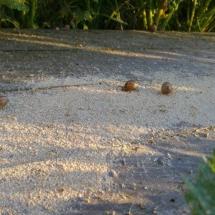 ślimaki w czerwcu