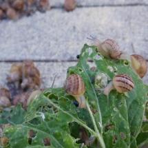 pole dla ślimaków