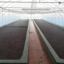 Túnel de plástico, invernadero (abril/mayo)