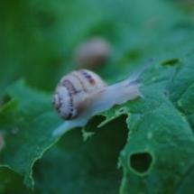 caracois pequenos