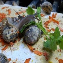 snail nutrition