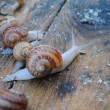 Le parc d'escargots – juillet