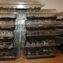 Huevos en ponederos hasta su eclosión