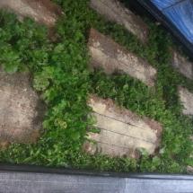 Déplacement des escargots dans le tunnel