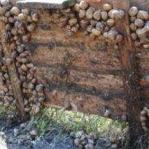 La parte inferior de comederos instalados en el campo – agosto