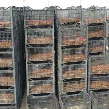 ségrégation des escargots