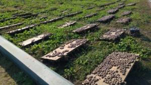 zbiory ślimaków