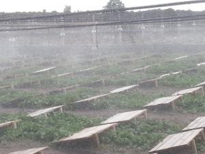 rociado en la granja