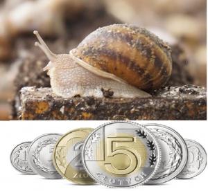 wydatki na ślimaki